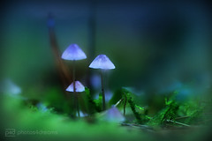 fairy fungi (photos4dreams) Tags: fungisundayp4d wald wiese forest trees bume photos4dreams p4d photos4dreamz pilz pilze fungus fungi bokeh