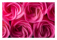 320/366: Everything's coming up roses (judi may) Tags: 366the2016edition 3662016 day320366 15nov16 soaproses roses pink pinkroses soap detail texture photoborder canon7d macro