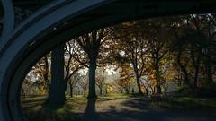 View Under Bridge #28 - Central Park (Eric Gross) Tags: sun newyork manhattan centralpark light
