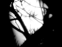 "Photo Series: Photography is an Abstract Art: ""Moonlit branches"" (Ken Whytock) Tags: moon branches trees pine light dark night"