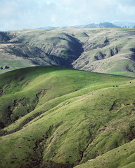 rolling hills on the way to the beach (L. Grainne) Tags: sonomacounty california rollinghills lupengrainne landscape