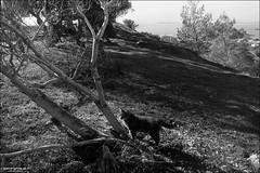 Saronida cat - film photography (georgios a.v.) Tags: monochrome blackandwhite minoltasrt101 rokkorsi2825 orwoun54 r09rodinal slr mflenses ilfordrapidfixer filmphotography nopp nopostprocessing