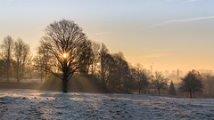 Tree-Mendous Morning (Warwick Tams) Tags: tree silhouette branches canon 5d mark iii morning light sun ray sunrise frost skyline colour color built hill park salford manchester landscape fog city horizon