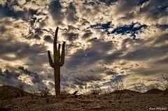 (Ken Mickel) Tags: arizona cacti cactus clouds estrellla goodyeararizona landscape landscapedesert outdoors plants saguaro topaz topazadjust nature photography sky