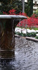 Conservatory Fountain (pjpink) Tags: longwoodgardens gardens pa pennsylvania november 2016 fall pjpink fountain