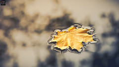 Floating (Tobias Neubert Photography) Tags: weideninderoberpfalz bayern deutschland herbst fall autumn laub leaf wasser water natur nature germany