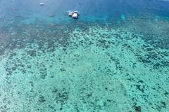 Cairns, Australia - Norman Reef (GlobeTrotter 2000) Tags: australia cairns oceania barrier coral diving great paradise reef scuba scubadiving sea tourism travel visit