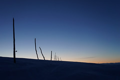 The blue hour I (harald.bohn) Tags: ski snø snow spor tracks kveld evening blåtime blått lys blue hour vinter winter cold kaldt