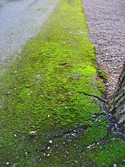 Musgo sobre un camino (Elbellavistas) Tags: musgo autumn moss otoo camino path