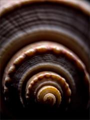 Seashell close up (ronnymariano) Tags: seashell closeup extensiontubes nature shadow light 2016 macro shell detail