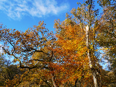 Bracklinn Falls woodland, Callander (Niall Corbet) Tags: scotland perthshire callander bracklinnfalls autumn woodland forest