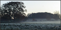 The Tang Of Frost Is Sharp And Clear.. (Picture post.) Tags: landscape nature green frost trees winter fields copse sunrise morning paysage arbre interestingness mist