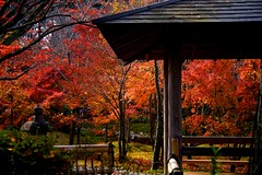 Shogun Zuka (tez-guitar) Tags: autumn autum 紅葉 autumn leaf leaves architect temple kyoto maple garden pentax pentaxart
