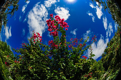 World Spin (Chuck LaChance) Tags: landscape flowers sky florida sunny blue green
