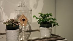 It's The Simple Things (I Flickr 4 JOY) Tags: video mantel cloche cloches houseplants itsthesimplethings littlebirdhouses birdhouses mirror