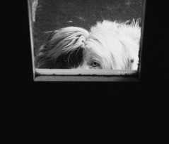 la Trudi. (sullen_snowflakes) Tags: blackandwhite dog window cane digital canon eos digitale finestra biancoenero 600d canoneos600d