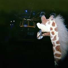 fun at the fair (www.timholme.com) Tags: camera colour 120 film toy holga stuffed lomo lomography birmingham go fair round roll giraffe merry fare