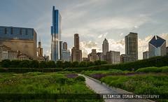 Millenium Park (Altamish Osman Photography) Tags: city sunset urban chicago green colors skyline garden nikon backdrop tall 1835 d600