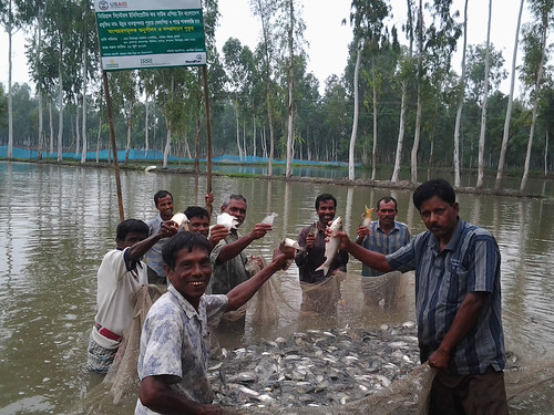 Demonstration of tilapia productions, Bangladesh. Photo by Md. Habibur Rahman, 2013.