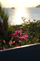 IMG_0807 (MayaBeee) Tags: pink flowers sunset crete bugambilias lentas