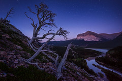 Midnight Grizz Alley (Michael Bollino) Tags: summer mountain mountains night nationalpark twilight montana glacier rockymountains