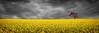 Alone (Stanley Kozak) Tags: storm tree field birds clouds zeiss rural canon country flight australia nsw carlzeiss conola zeiss18mm canon5dmkiii