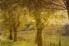 Immersione nella natura (Laralucy) Tags: italy verde texture foglie alberi digitalart natura giallo sicily autunno postprocessing elaborazione blinkagain