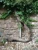 arbre (David Chancolon) Tags: arbre tronc tordu wt19i