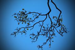 Autumn 1 (laufar1) Tags: autumn tree leaves leaf branch
