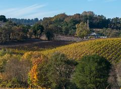 173052013WestsideRoad.jpg (greenheron47) Tags: california ca fall landscape vineyard fallcolor sonomacounty healdsburg westsideroad greenheron47 olympus75mm