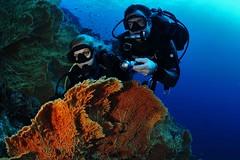 Dive In - Silvia Boccato Sharm El Sheikh (Dive In Scuba Adventure www.diveintravelonline.com) Tags: divers sub redsea sharmelsheikh diving sharm immersioni divein marrosso subacquei divingegypt renaissancegoldenviewbeachresort immersionisharm padiresort diveinsharm elfaraanareefresort