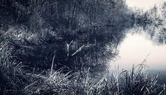blue lakecorner (LauraSorrells) Tags: november autumn favorite lake water monochrome reflections landscape kentucky silence pilgrimage 2012 gethsemani thinplace domfredericslake