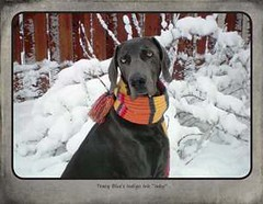"FINAL Blue Weim 2014 calendar_Page_24 • <a style=""font-size:0.8em;"" href=""http://www.flickr.com/photos/109220014@N05/10955878383/"" target=""_blank"">View on Flickr</a>"