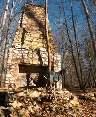 47/52 all hearth, no home (huckleberryblue) Tags: autumn dog gracie hiking hound week47 bluetickcoonhound enoriverstatepark 52weeksfordogs formerhomesteadsite