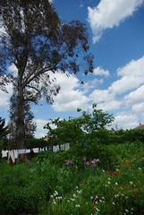 Saint Front de Pradoux, Fleurs du jardin (jlfaurie) Tags: flowers iris france flores fleurs garden casa jardin dordogne marguerite didi mumsgarden aquitaine coquelicots jlf saintfrontdepradoux mmdidi jlfaurie