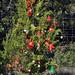 Trees_of_Loop_360_2013_278