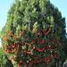 Trees_of_Loop_360_2013_254
