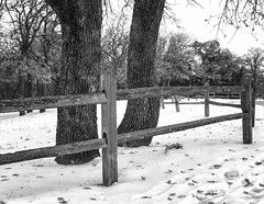 Winter Scene_MG_9196 (Kool Cats Photography over 6 Million Views) Tags: trees winter blackandwhite bw snow blackwhite scenic scene yabbadabbadoo nikcolorefexpro nikviveza canon24105f4lisusmlens