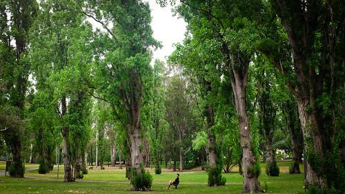 Telopea Park