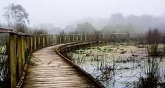 Boardwalk in the fog (stormgirl1960) Tags: morning bridge mist lake nature water fog sunrise river reeds landscape wetlands boardwalk