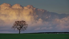Tree and Clouds (Chris Beesley) Tags: