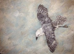 Photo of Fulmar progress