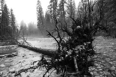 PAU_1584.jpg (Travis Mortz) Tags: california park winter summer portrait white snow black film ice landscape photography waterfall nikon long exposure falls upper national valley yosemite dome half bridalveil {vision}:{mountain}=0592 {vision}:{outdoor}=099