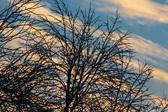 Winter Sky (A Picture is Worth ---) Tags: sky nature sunrise skyscape stripes diagonal wintersky skyblue diagonallines reachforthesky winterblues winterimage feb7th2014 shapelinesandpatterns striptysky