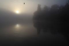 Brume (rogermarcel) Tags: sunset sun mist river soleil mouette brume waterscape orn bestcapturesaoi elitegalleryaoi mygearandme mygearandmepremium mygearandmebronze ruby10 ruby15 rogermarcel