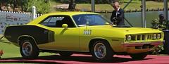 1971 Hemi Cuda (Bill Jacomet) Tags: auto show lake car la 1971 texas stripes plymouth 71 billboard resort hemi mopar concours spa cuda 2014 conroe delegance torretta of