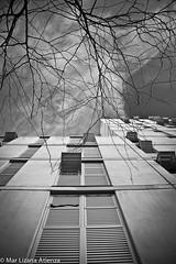 (Mar Lizana) Tags: barcelona bw black byn arbol edificio poblenou whithe iefc poble9