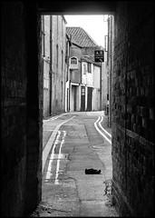 Pepper Alley (R~P~M) Tags: road street uk greatbritain england town alley unitedkingdom oxfordshire banbury oxon