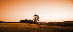 At the End of the Day (mikka16s) Tags: sunset tree church field canon landscape 2470mml sonnenuntergang dorf village hessen cereal feld kirche monochrom landschaft wald baum stork marburgbiedenkopf hesse storch getreide oberweimar platinumheartaward weimarlahn