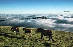 Lekanda cubierta de niebla (Jabi Artaraz) Tags: jabiartaraz jartaraz zb euskoflickr yeguas potros caballos horse bruma niebla lekanda amanecer landscape paisaje gorbea